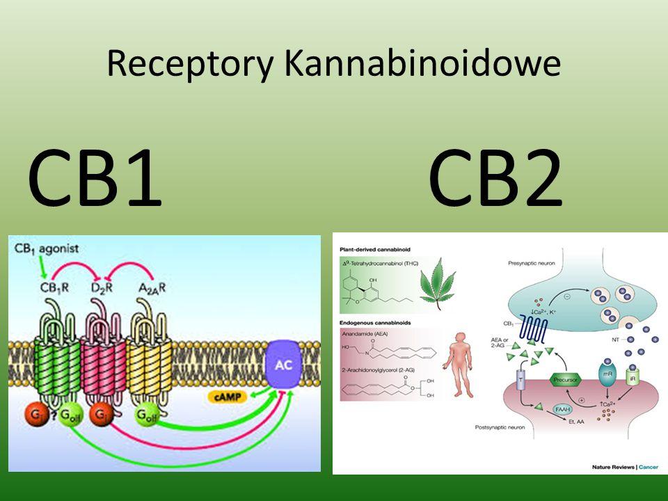 Receptory Kannabinoidowe