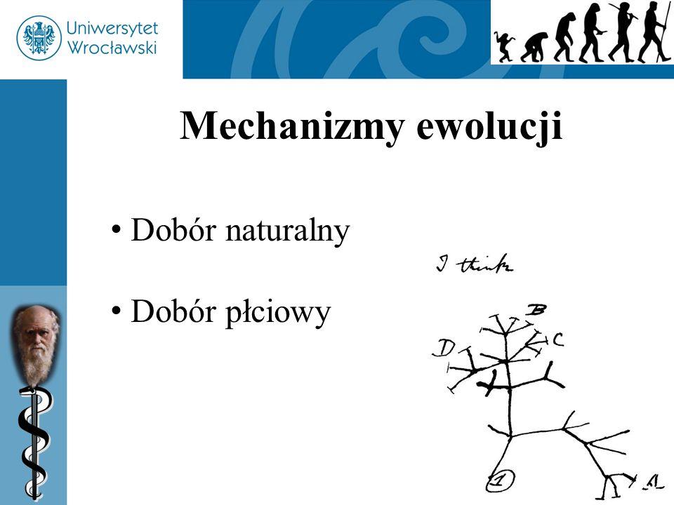 Mechanizmy ewolucji Dobór naturalny Dobór płciowy 54