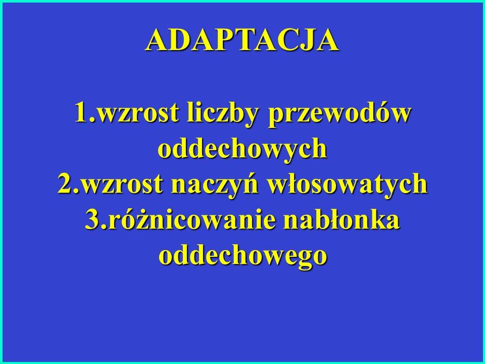 ADAPTACJA 1.wzrost liczby przewodów oddechowych