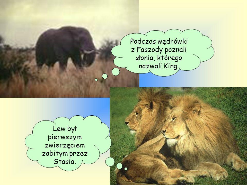 Podczas wędrówki z Faszody poznali słonia, którego nazwali King.