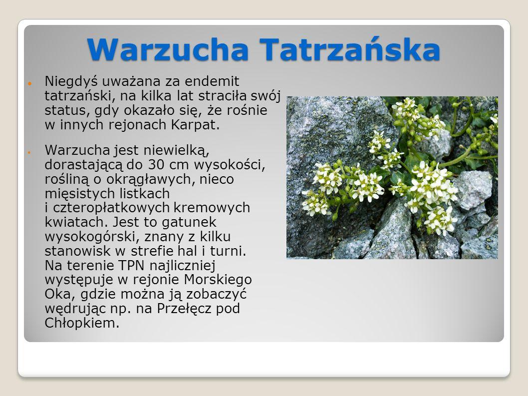 Warzucha Tatrzańska