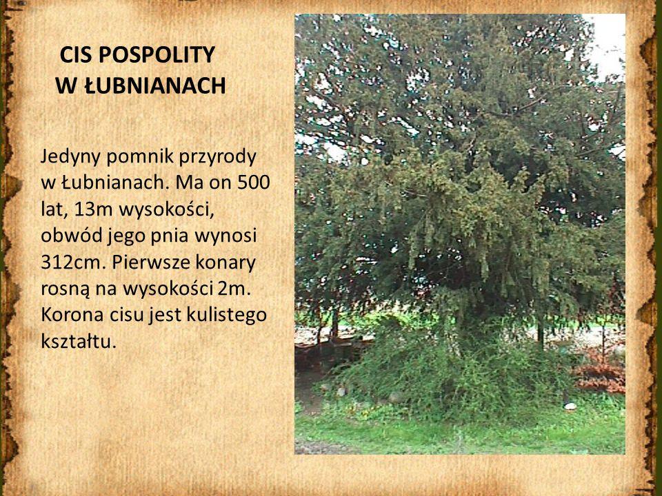 CIS POSPOLITY W ŁUBNIANACH