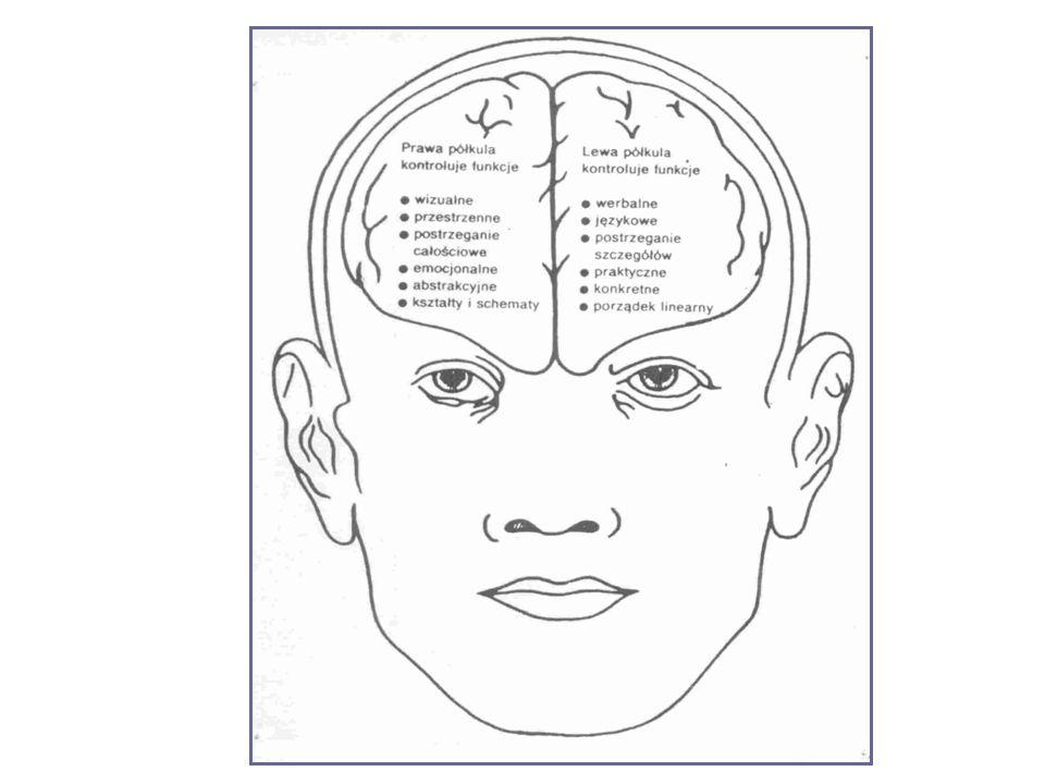 W czasie procesu uczenia się ludzie w sposób nieświadomy wykorzystują głównie lewą, tzw.
