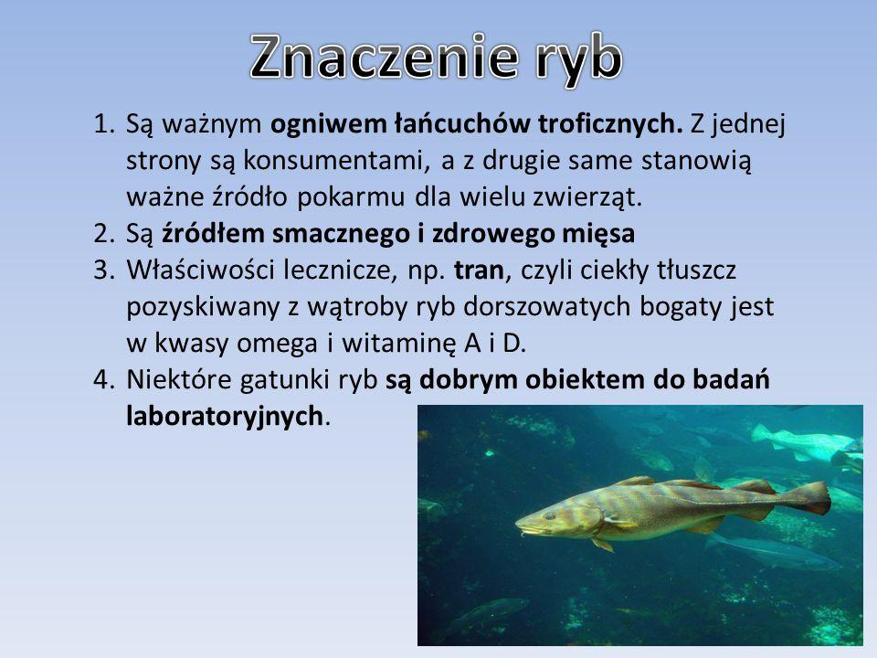 Znaczenie ryb