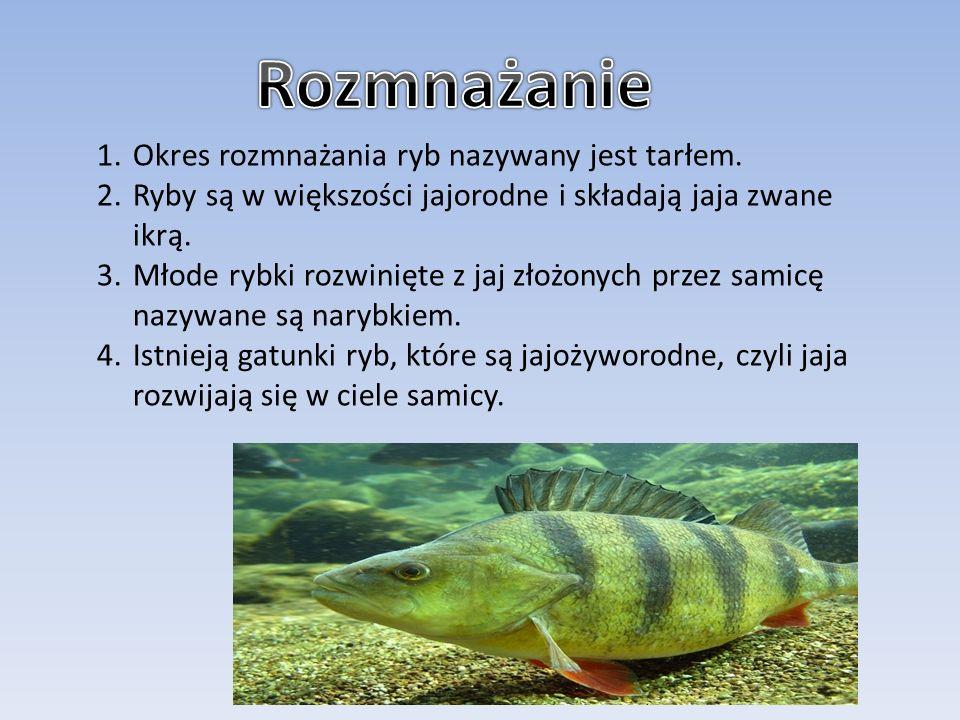 Rozmnażanie Okres rozmnażania ryb nazywany jest tarłem.