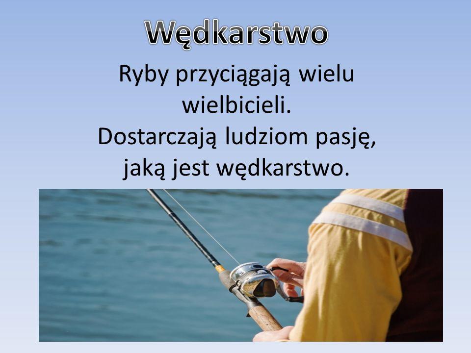 Wędkarstwo Ryby przyciągają wielu wielbicieli.