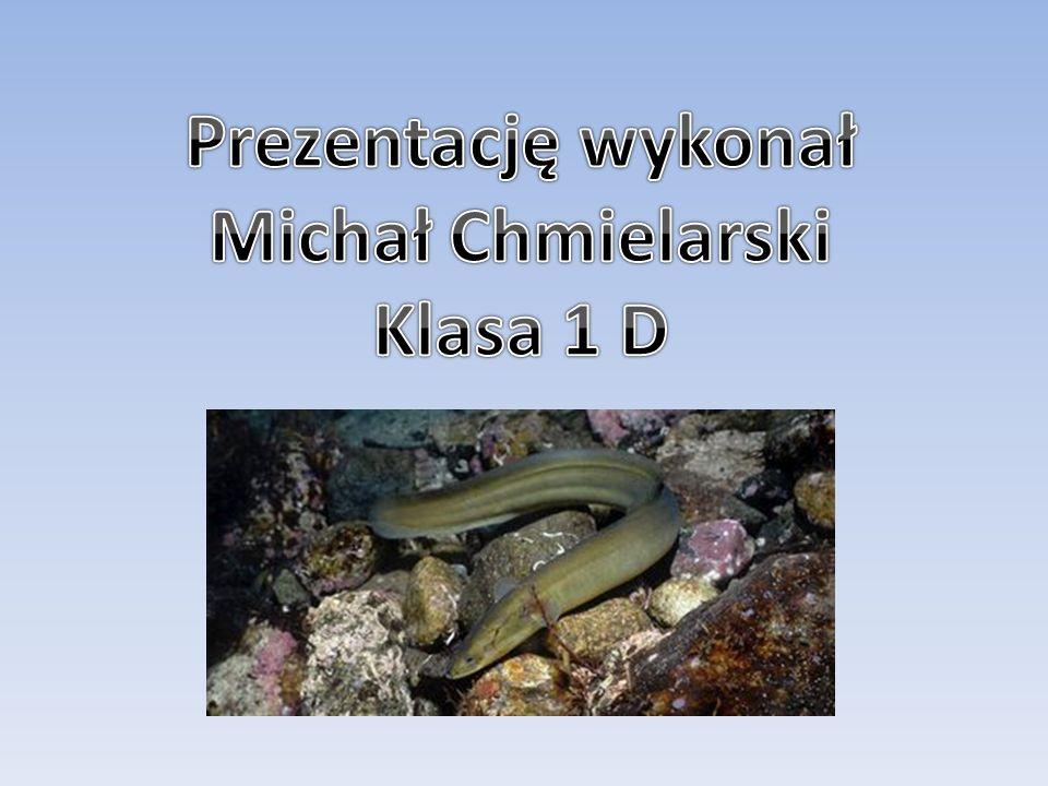 Prezentację wykonał Michał Chmielarski Klasa 1 D