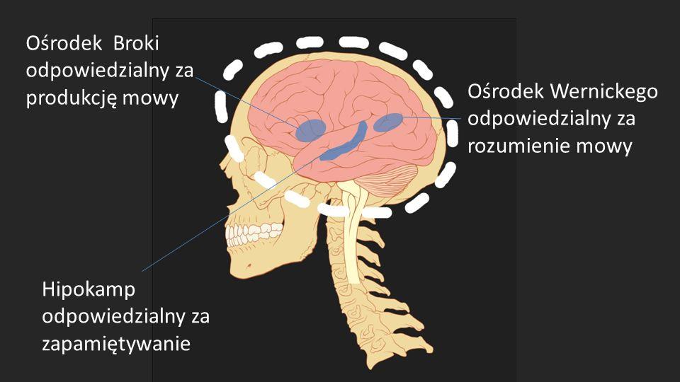 Ośrodek Broki odpowiedzialny za produkcję mowy. Ośrodek Wernickego. odpowiedzialny za rozumienie mowy.