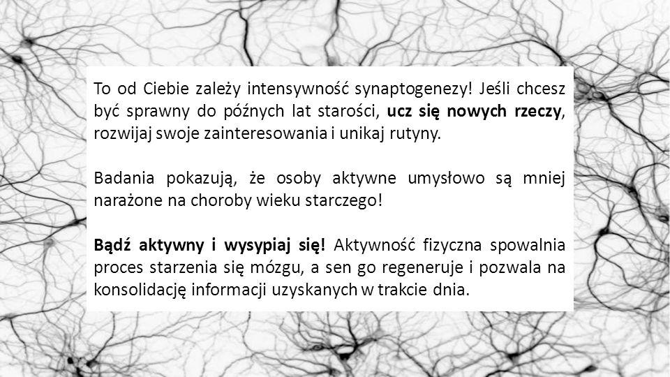To od Ciebie zależy intensywność synaptogenezy