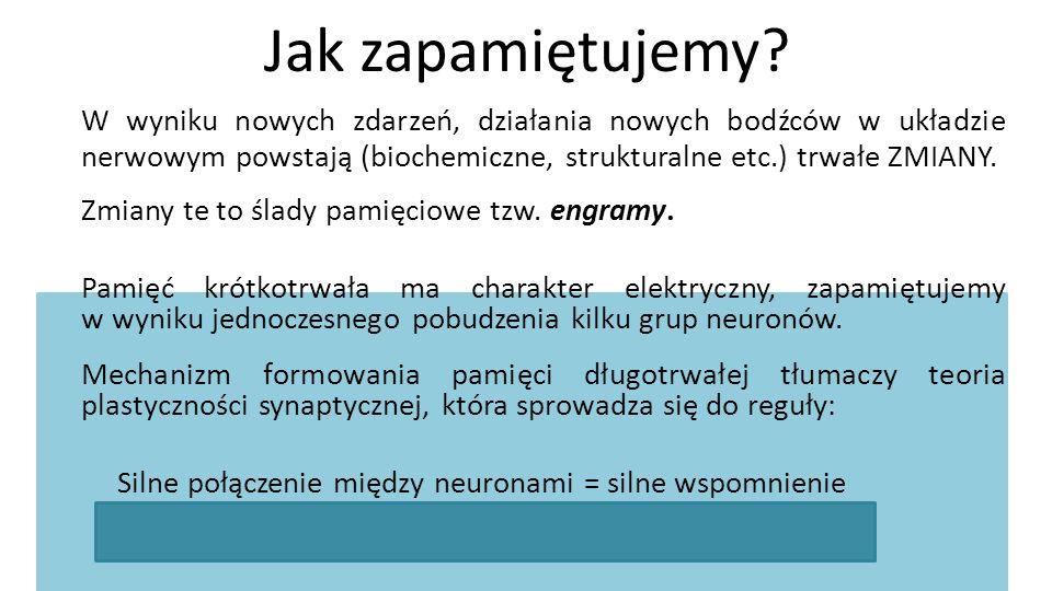 Jak zapamiętujemy W wyniku nowych zdarzeń, działania nowych bodźców w układzie nerwowym powstają (biochemiczne, strukturalne etc.) trwałe ZMIANY.