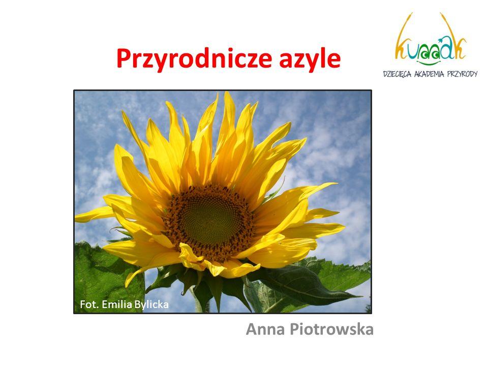 Przyrodnicze azyle 1. Kolaż ogrodu Fot. Emilia Bylicka Anna Piotrowska