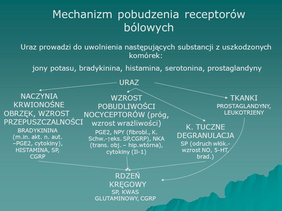 Mechanizm pobudzenia receptorów bólowych