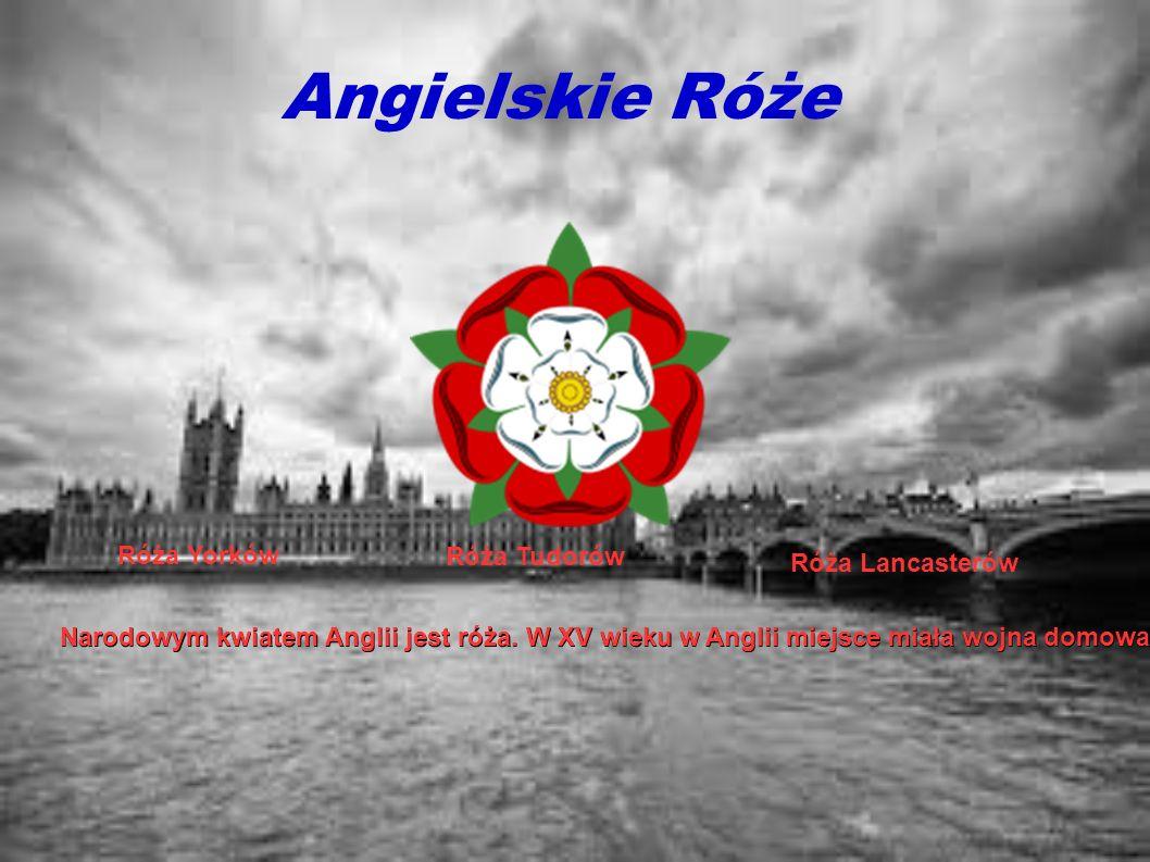 Angielskie Róże Róża Yorków Róża Tudorów Róża Lancasterów