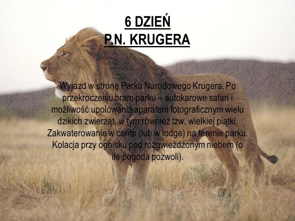 6 DZIEŃ P.N. KRUGERA.