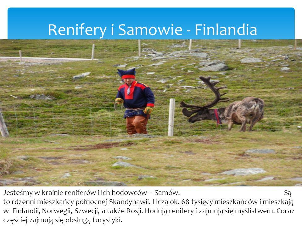 Renifery i Samowie - Finlandia
