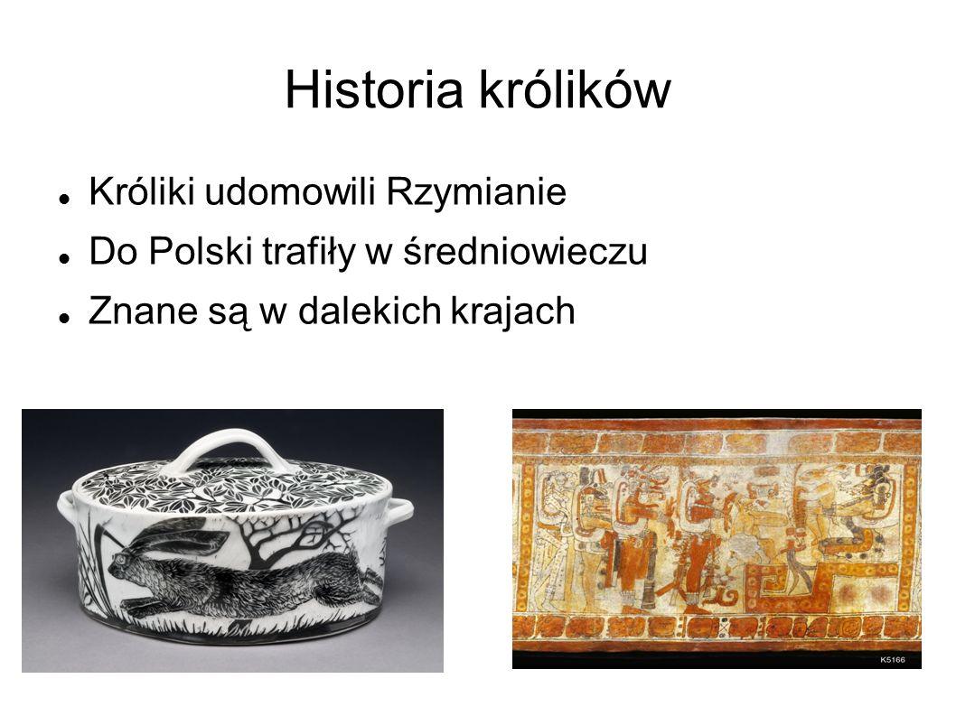 Historia królików Króliki udomowili Rzymianie