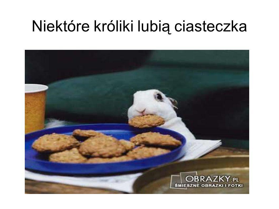 Niektóre króliki lubią ciasteczka