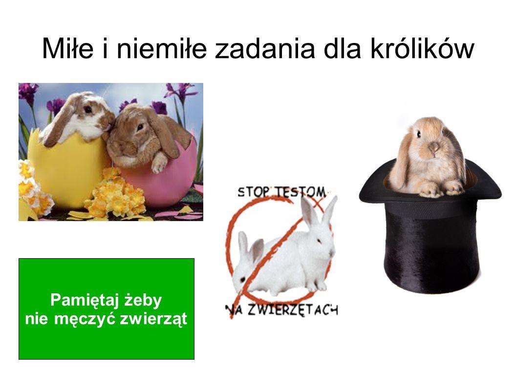 Miłe i niemiłe zadania dla królików
