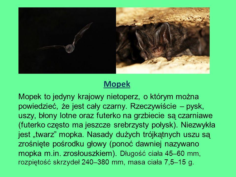 Mopek