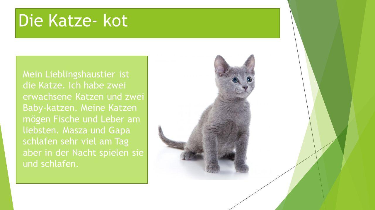 Die Katze- kot