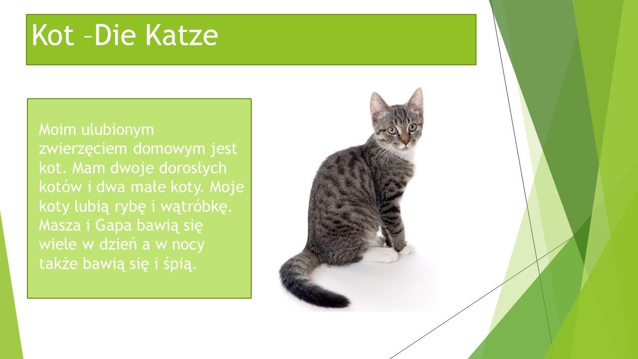 Kot –Die Katze