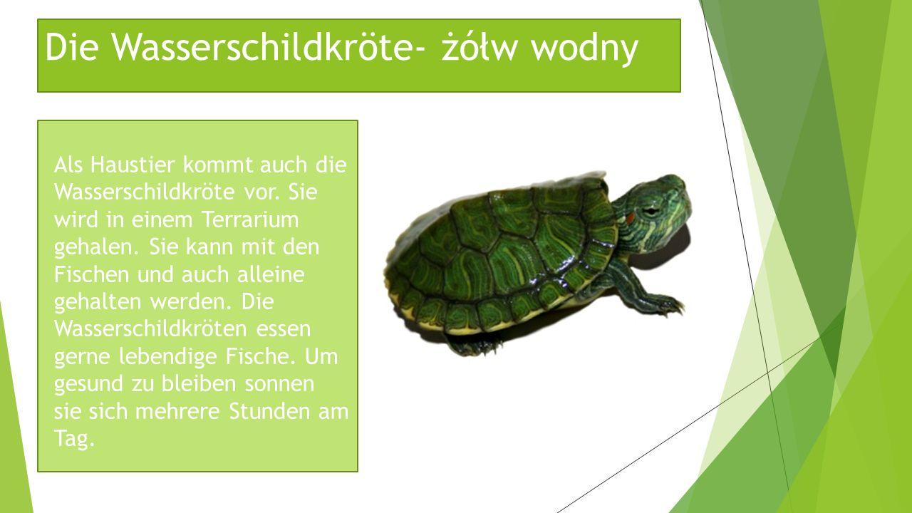 Die Wasserschildkröte- żółw wodny