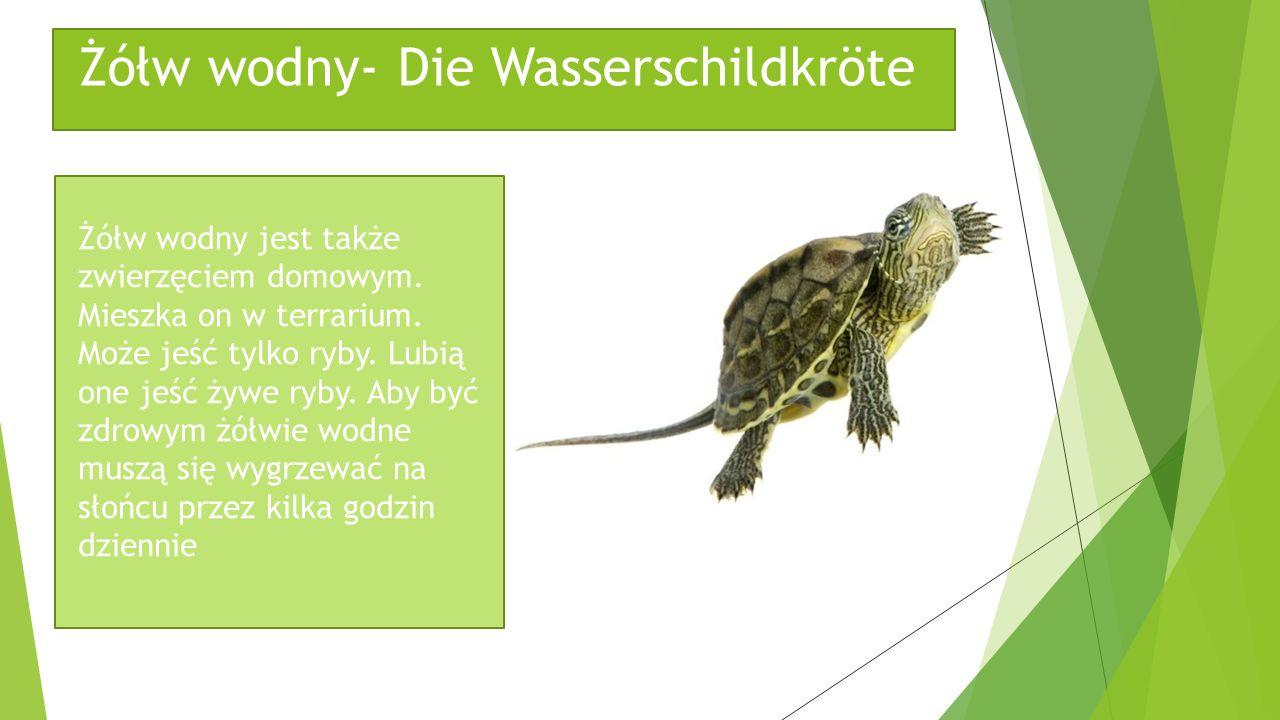Żółw wodny- Die Wasserschildkröte
