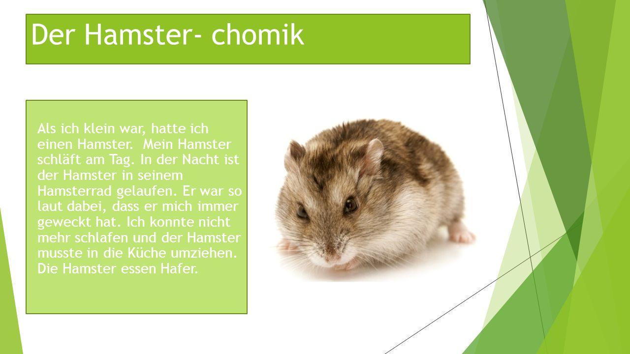 Der Hamster- chomik