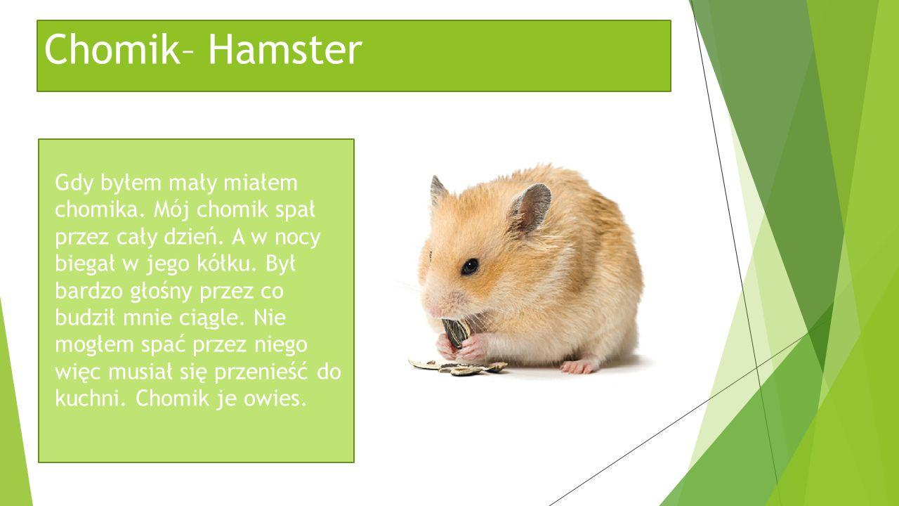 Chomik– Hamster