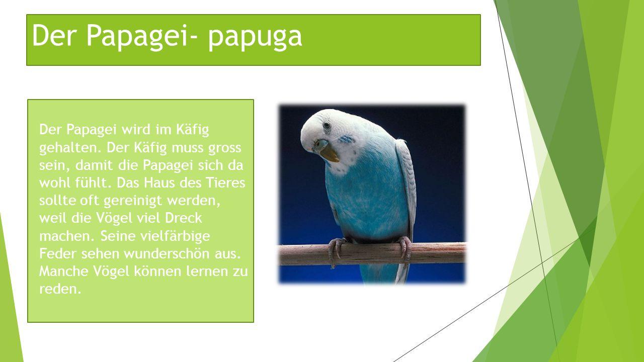 Der Papagei- papuga