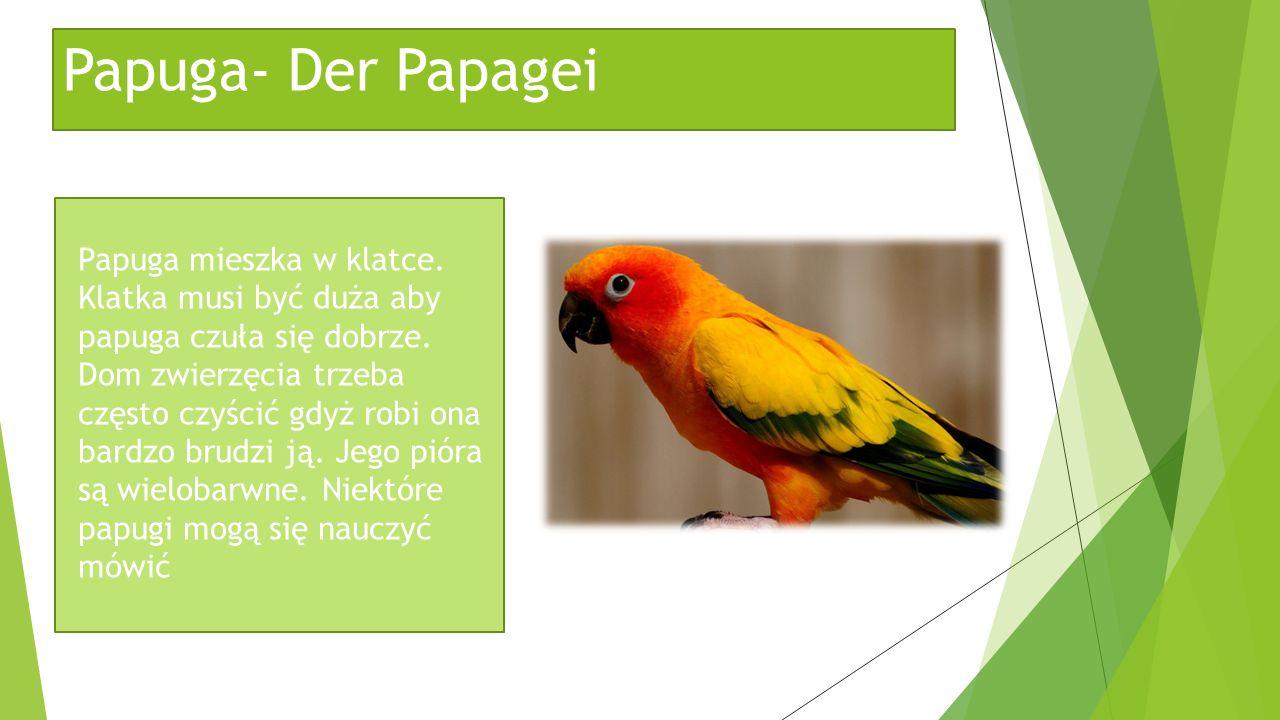 Papuga- Der Papagei