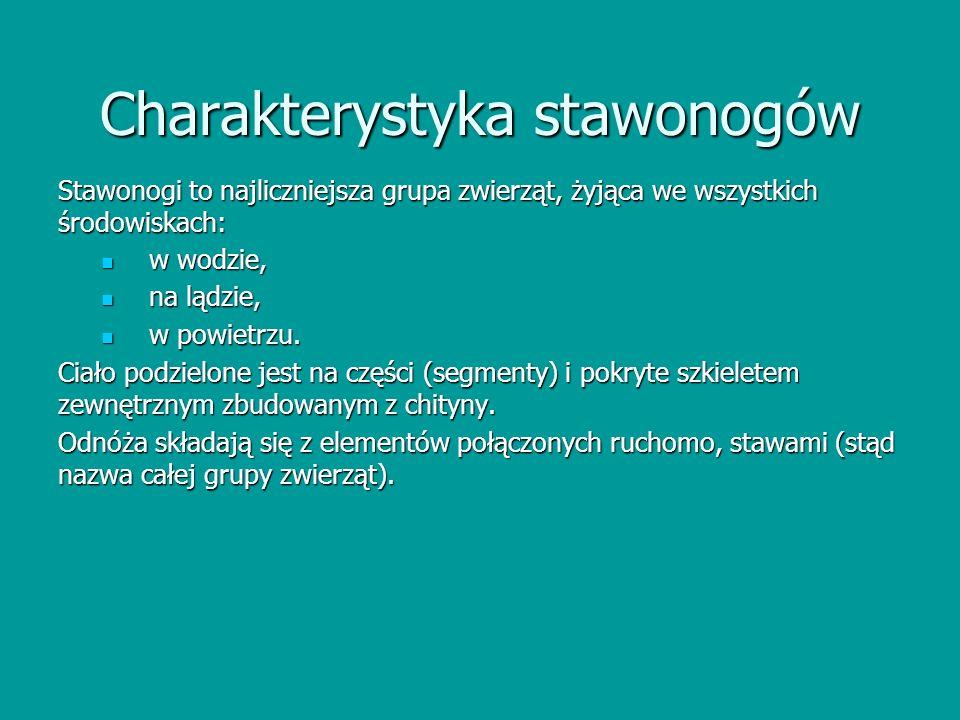 Charakterystyka stawonogów