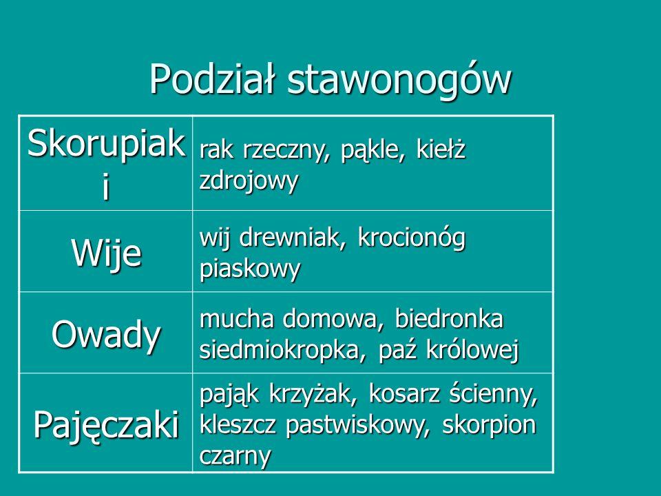 Podział stawonogów Skorupiaki Wije Owady Pajęczaki