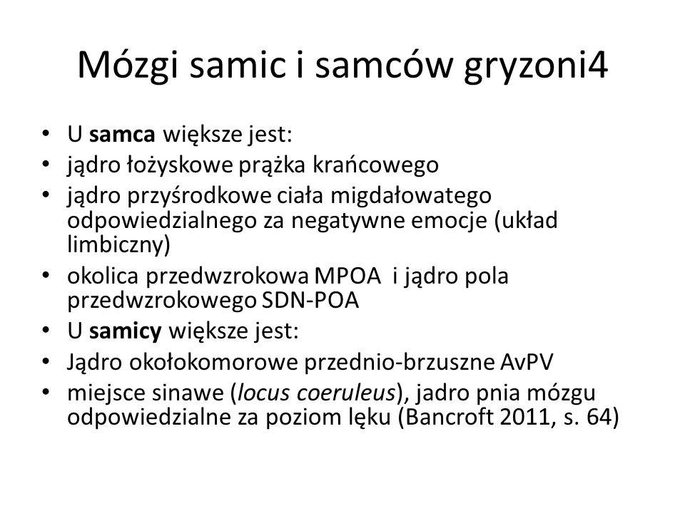 Mózgi samic i samców gryzoni4