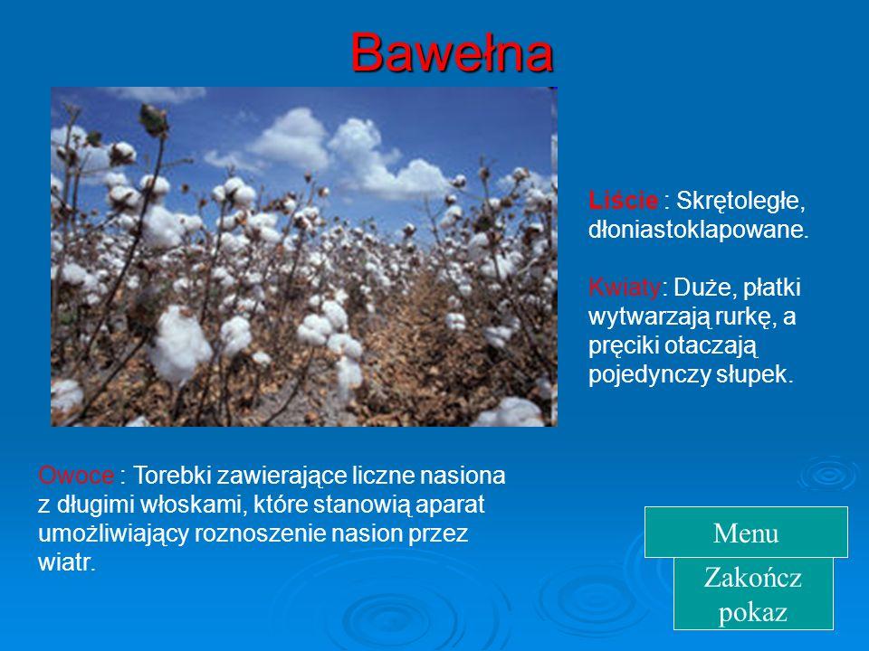 Bawełna Menu Zakończ pokaz Liście : Skrętoległe, dłoniastoklapowane.
