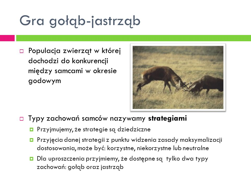 Gra gołąb-jastrząb Populacja zwierząt w której dochodzi do konkurencji między samcami w okresie godowym.