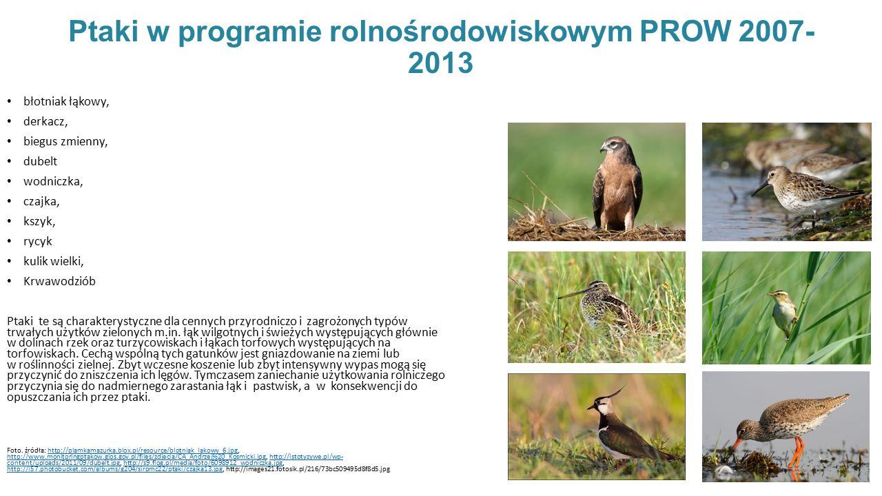 Ptaki w programie rolnośrodowiskowym PROW 2007-2013