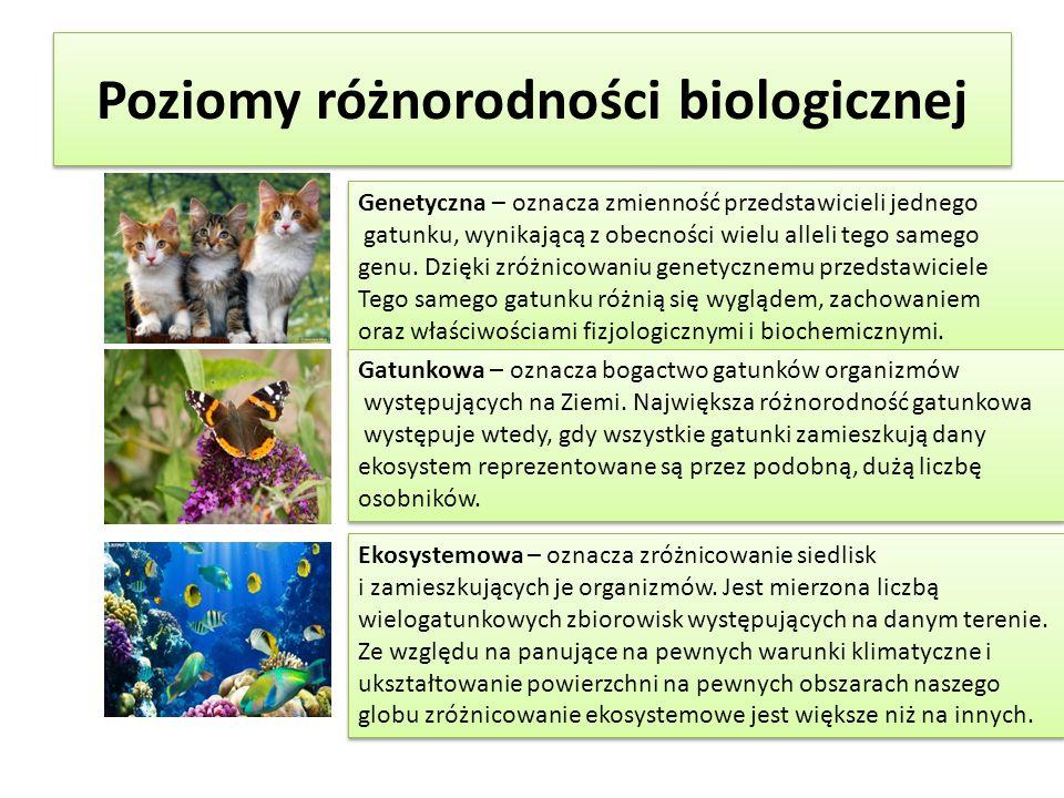 Poziomy różnorodności biologicznej