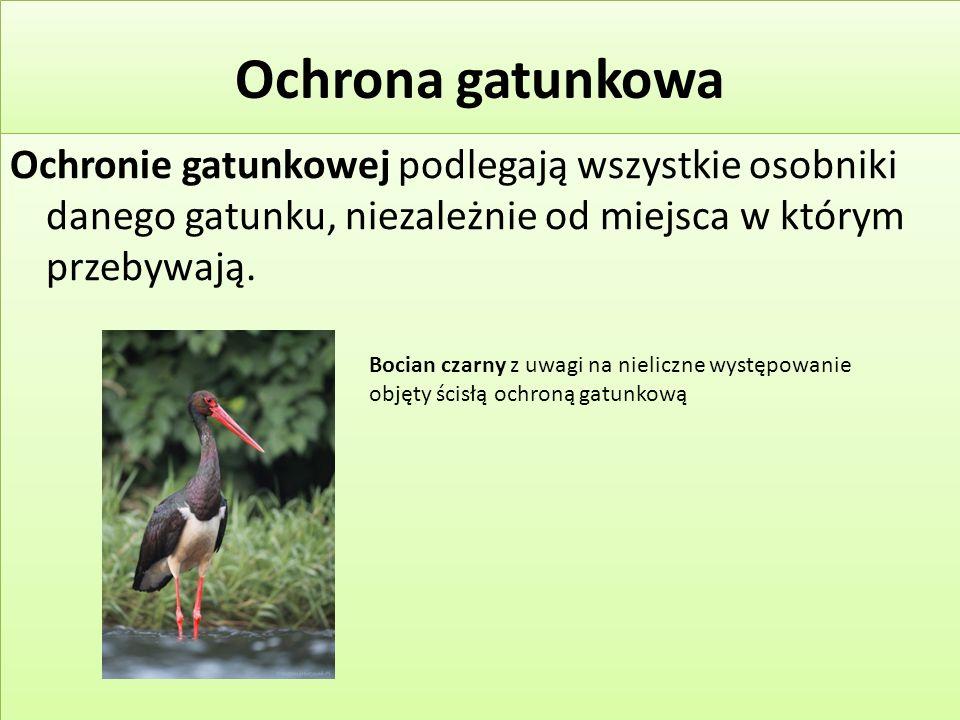Ochrona gatunkowa Ochronie gatunkowej podlegają wszystkie osobniki danego gatunku, niezależnie od miejsca w którym przebywają.