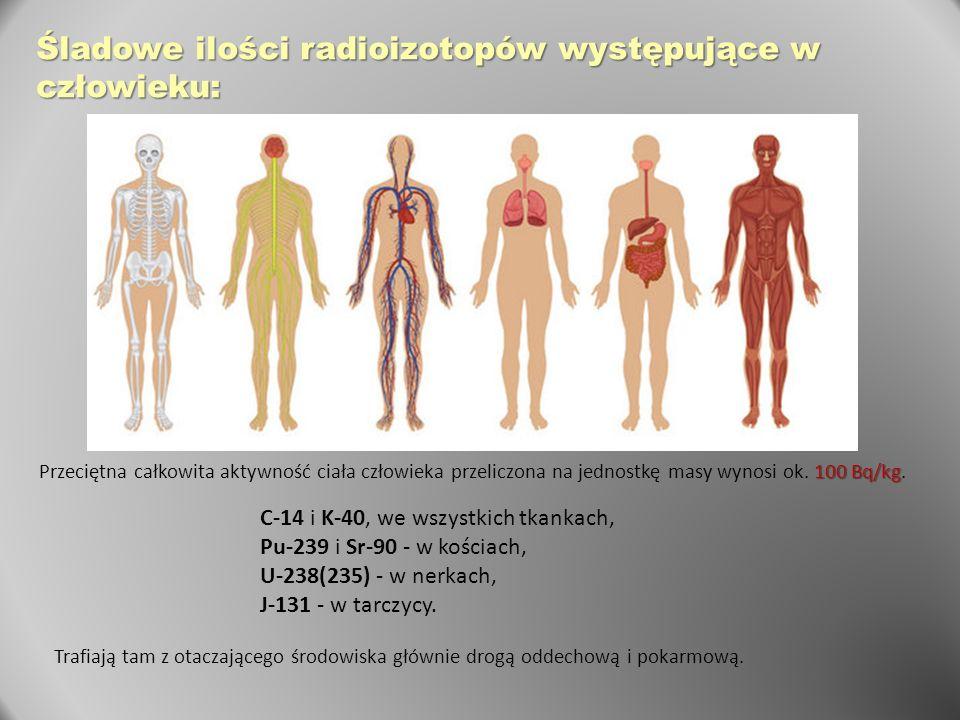 Śladowe ilości radioizotopów występujące w człowieku: