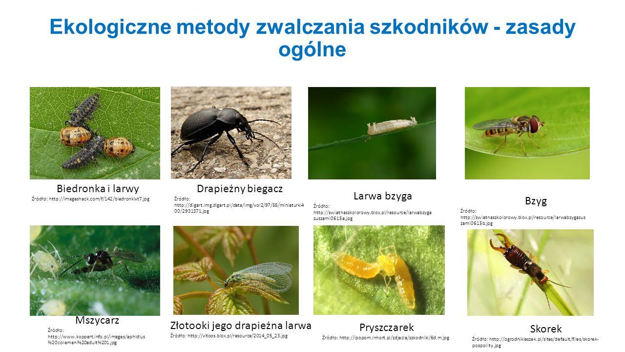 Ekologiczne metody zwalczania szkodników - zasady ogólne