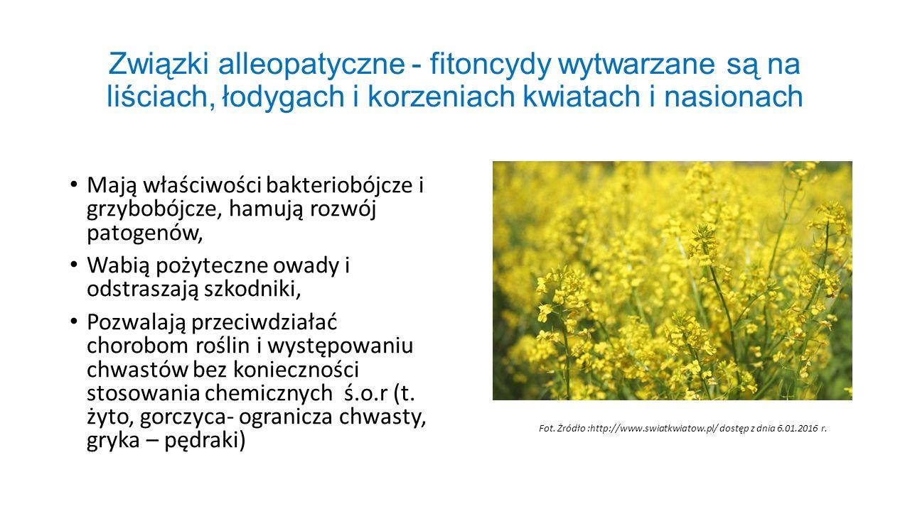 Związki alleopatyczne - fitoncydy wytwarzane są na liściach, łodygach i korzeniach kwiatach i nasionach