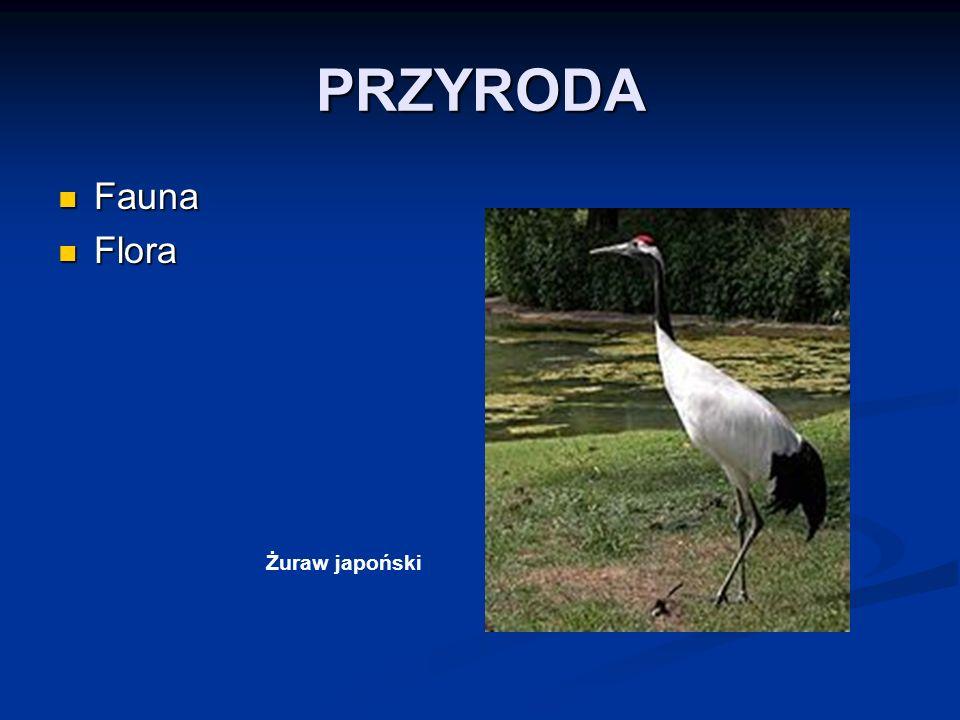 PRZYRODA Fauna Flora Żuraw japoński