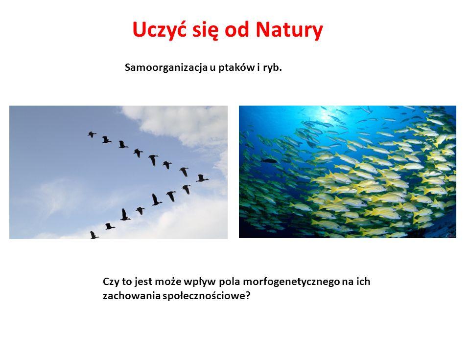 Uczyć się od Natury Samoorganizacja u ptaków i ryb.