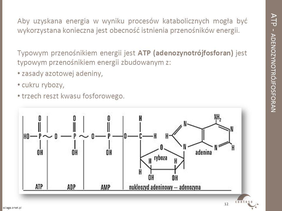 ATP - adenozynotrójfosforan