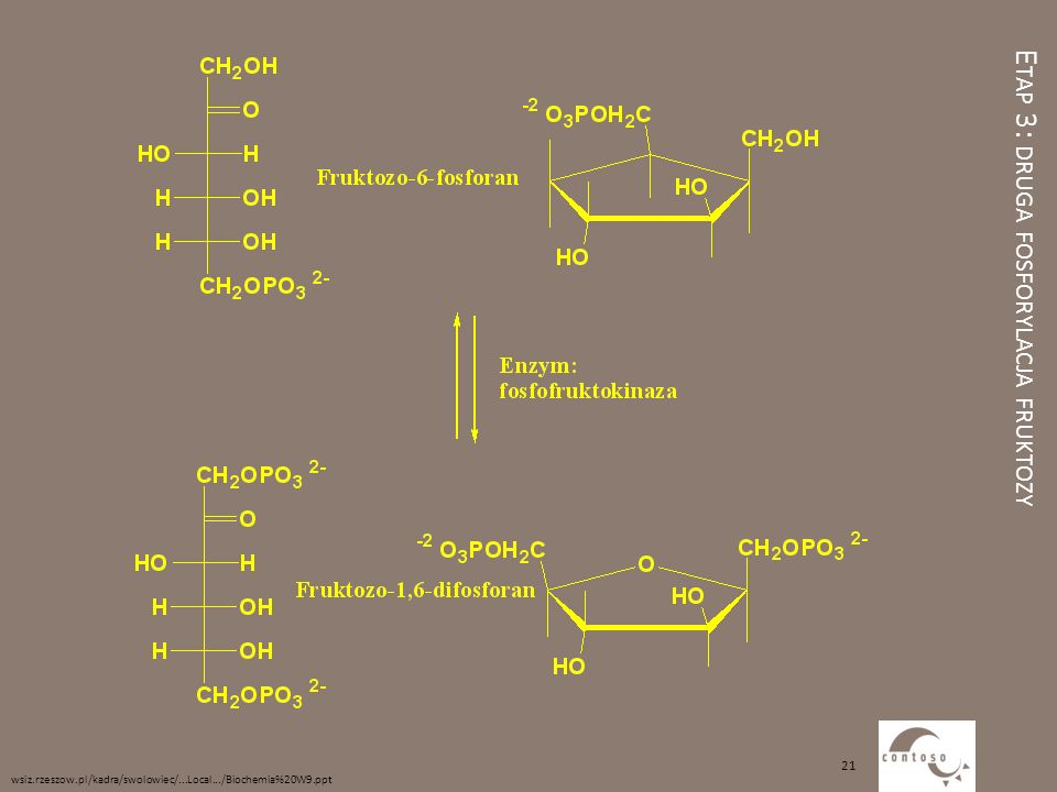 Etap 3: druga fosforylacja fruktozy
