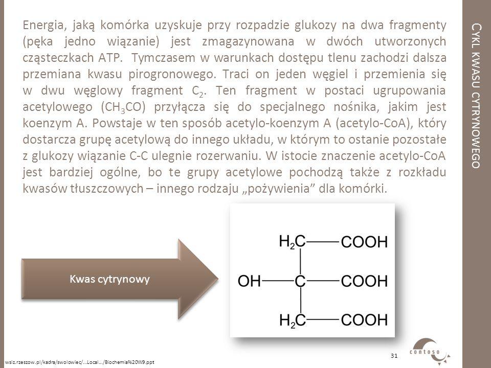 Cykl kwasu cytrynowego