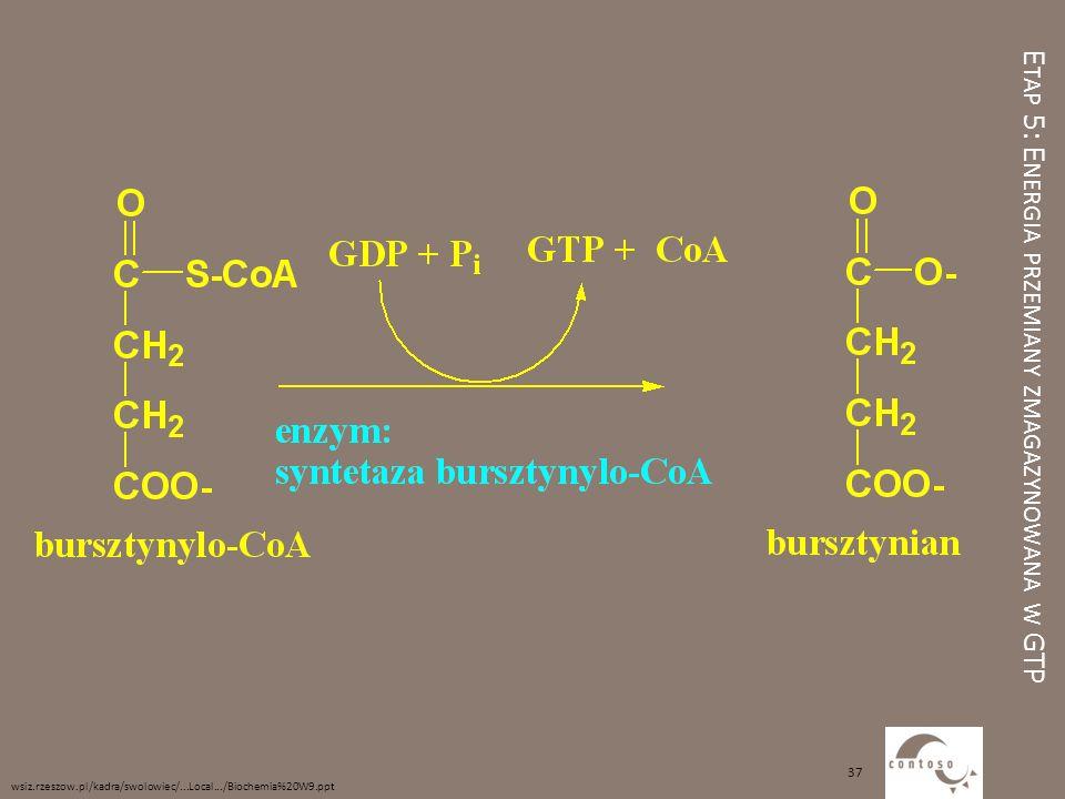 Etap 5: Energia przemiany zmagazynowana w GTP