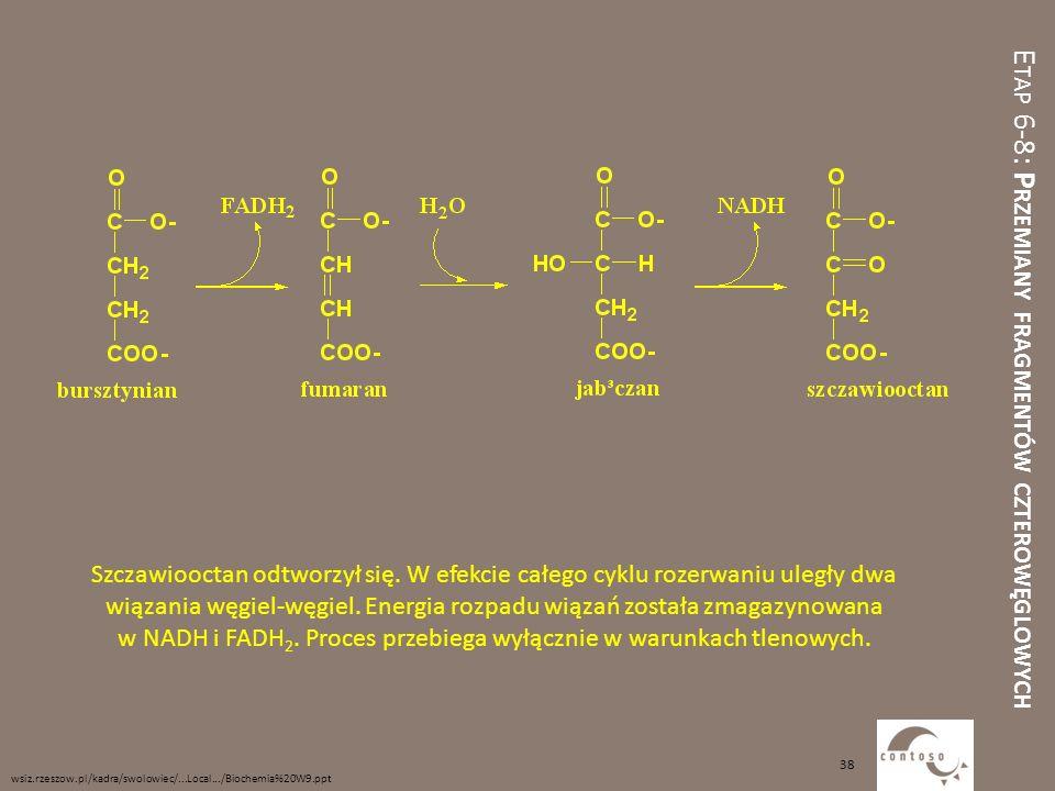 Etap 6-8: Przemiany fragmentów czterowęglowych