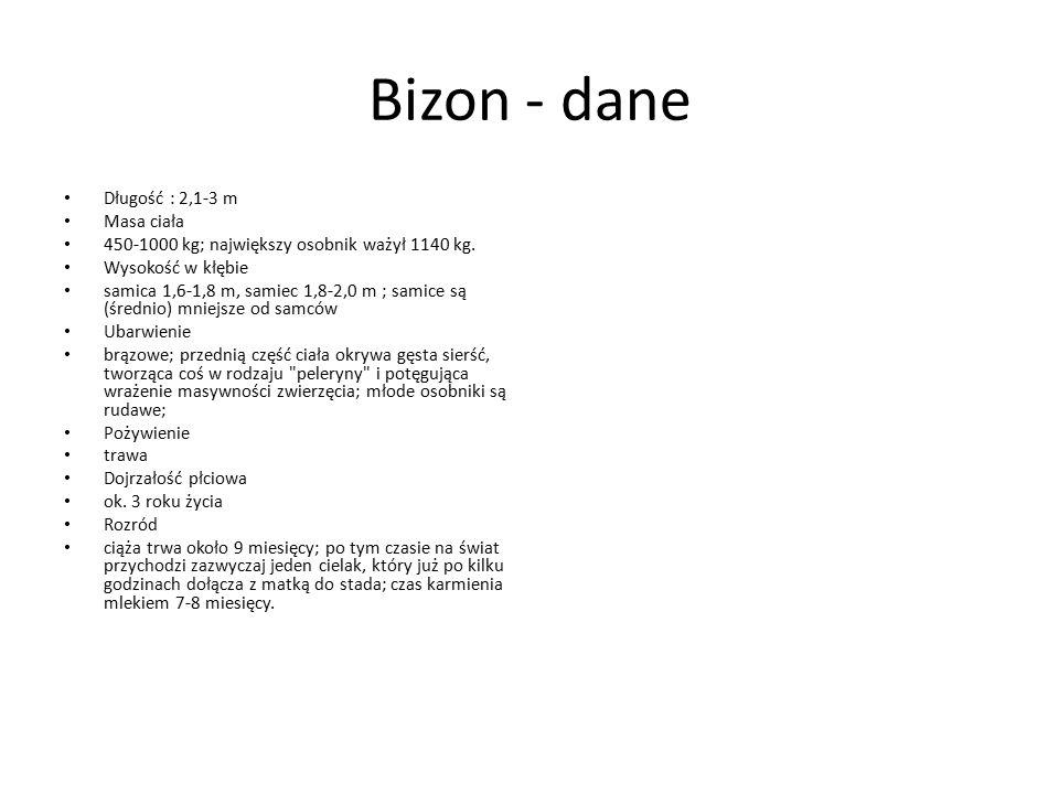 Bizon - dane Długość : 2,1-3 m Masa ciała